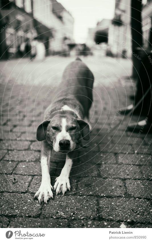Hundsmüde Stadt Einsamkeit Erholung ruhig Tier Liebe Wege & Pfade Zufriedenheit Beginn Lebensfreude schlafen einzigartig Abenteuer Dorf entdecken