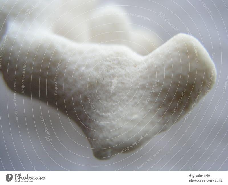 Korallenarm Natur Wasser weiß Kalk Pore