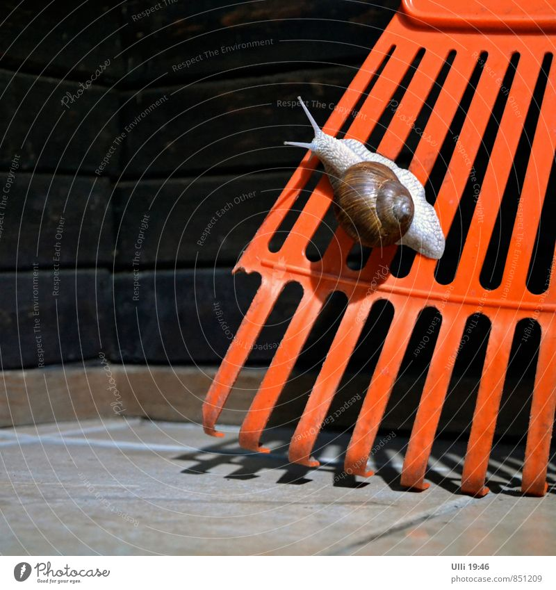 Name:Screeny. Beruf: Schnecke. Kosename: ? Garten Klettern Bergsteigen Erde Sommer Regen Gewitter Blitze Mauer Wand Terrasse Tier Weinbergschnecken 1 Stein Holz