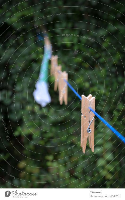 Klammer Erholung Schwimmen & Baden Dekoration & Verzierung Umwelt Schönes Wetter Pflanze Linie hängen dünn blau grün ruhig Häusliches Leben Wäscheleine trocknen