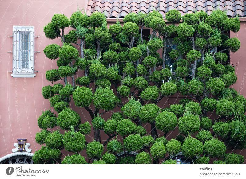 Großes Gewächs Pflanze Baum San Francisco Kalifornien USA Mauer Wand Fassade lustig Farbfoto