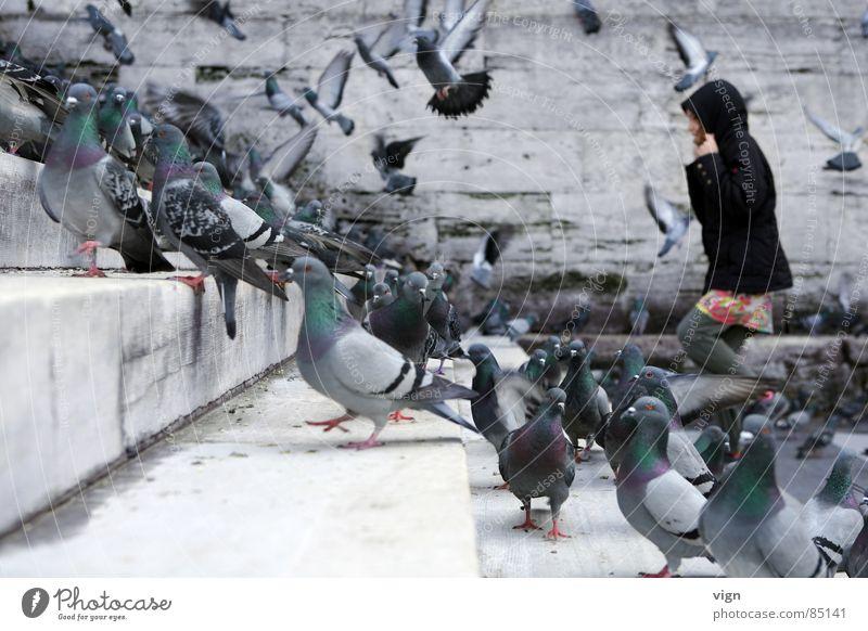 Die Vögel schwarz Tier Menschengruppe Mauer Vogel Treppe mehrere viele Taube aufsteigen Kapuze Türkei Istanbul Moschee beleben