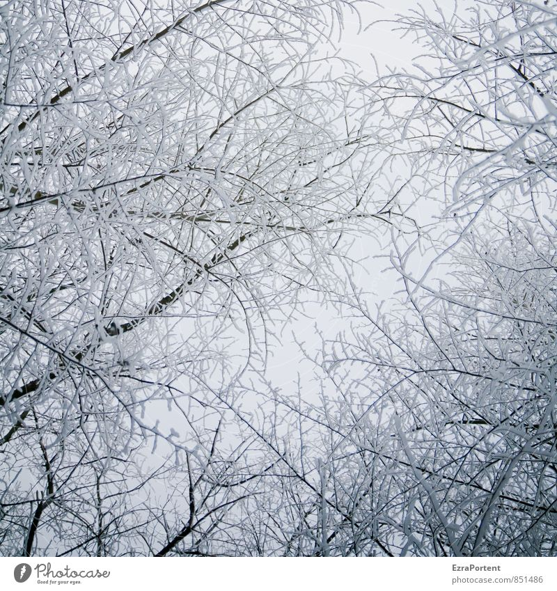 alles Zucker Umwelt Natur Landschaft Pflanze Luft Himmel Winter Klima Eis Frost Schnee Baum Wald Holz hell kalt schwarz weiß Ast Schneefall frieren Dezember