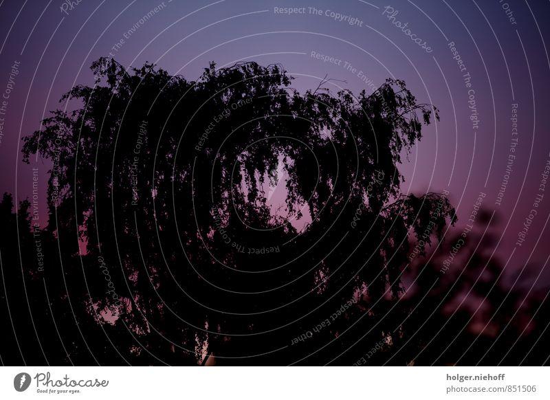 Lila Himmel statt Wolken Umwelt Natur Sonnenaufgang Sonnenuntergang Sommer Schönes Wetter Baum Erholung träumen blau violett schwarz Stimmung Warmherzigkeit