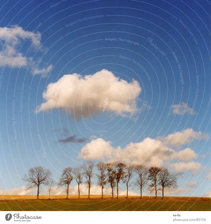 Baumgrüppchen Wäldchen Allee Herbst ruhig Feld Wohngemeinschaft Zusammensein Wolken schön Himmel mehrere Wetter Schönes Wetter baugruppe horde chaussee