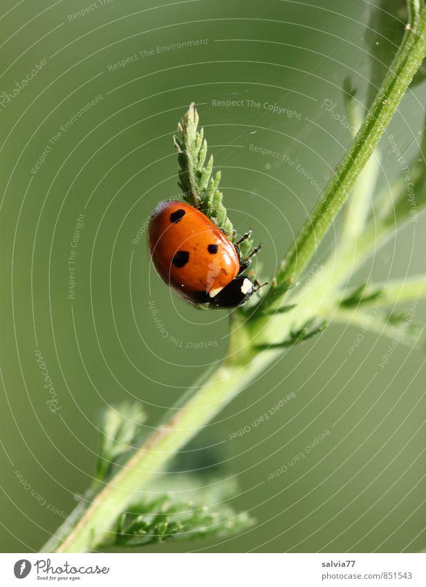Pause Umwelt Natur Pflanze Tier Frühling Sommer Blatt Wildpflanze Wiese Wildtier Käfer 1 krabbeln klein natürlich grün rot ruhig Glaube Religion & Glaube Glück