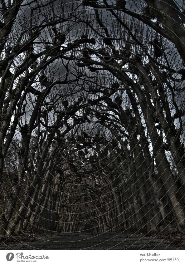 Platanendom Natur schwarz Einsamkeit Tier dunkel kalt Traurigkeit Landschaft Angst Trauer trist Spaziergang bedrohlich Ast gruselig Verzweiflung