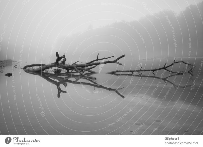 Baumspiegelung im Nebel Natur Wasser Herbst Seeufer Flussufer Moor Sumpf dunkel grau schwarz weiß träumen Reflexion & Spiegelung Teich Au Holz Treibholz