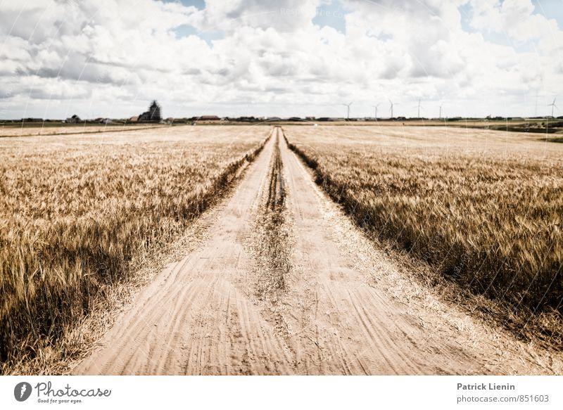 Kornfeld in Dänemark Umwelt Natur Landschaft Urelemente Erde Himmel Wolken Schönes Wetter Pflanze Nutzpflanze Feld Abenteuer Einsamkeit einzigartig Gesundheit