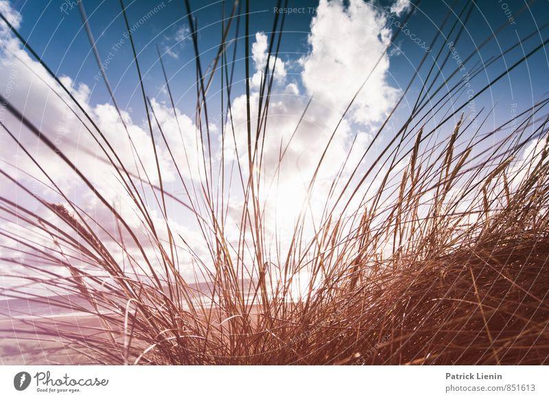 Strandtag Himmel Natur Pflanze Sommer Sonne Meer Erholung Landschaft ruhig Wolken Umwelt Wärme Leben Küste Sand