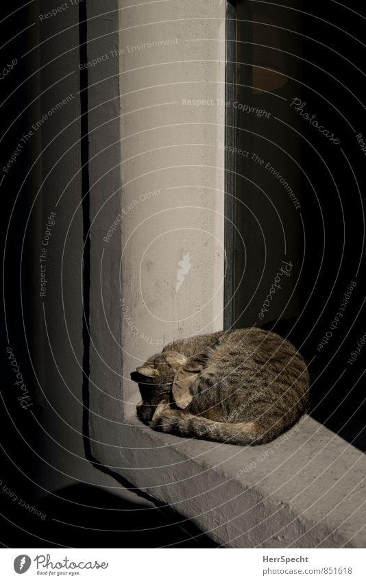 Licht aus! Katze Sonne Tier Fenster grau Stein hell braun liegen Beton schlafen Sonnenbad verstecken Haustier Hauskatze Pfote
