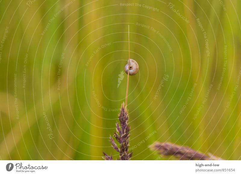 free climbing Natur Tier Sommer Schönes Wetter Wärme Gras Wildpflanze Wiese Schnecke 1 weich braun gelb grün Abenteuer ästhetisch Einsamkeit Farbfoto