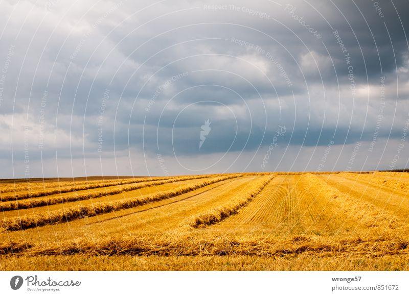 Aufziehendes Wetter Himmel Sommer Landschaft Wolken dunkel gelb grau Horizont Feld gold bedrohlich Getreide Ernte Unwetter Gewitter