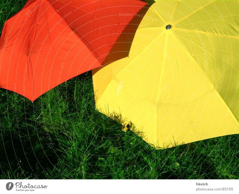 Rot-Gelb-Grün grün rot gelb Wiese Gras Frühling Regen nass Sicherheit Rasen Regenschirm verstecken Gewitter Ampel wasserdicht wetterfest