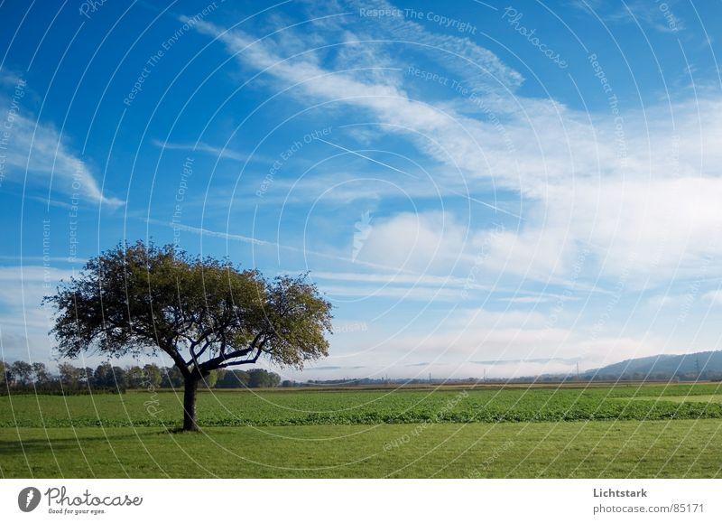 morgentau Himmel Baumstruktur Feld Ackerbau ruhig Nebel Landwirtschaft bequem Baumstamm Himmelszelt grun blau Seil