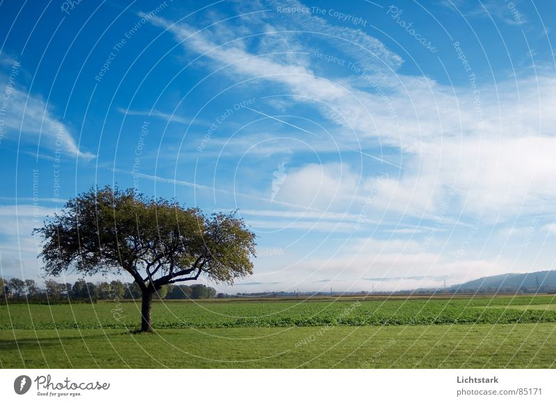 morgentau Himmel blau ruhig Feld Nebel Seil Landwirtschaft Baumstamm Ackerbau bequem Himmelszelt Baumstruktur