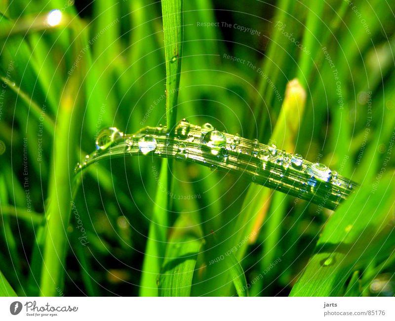 Im feuchtem Gras Wasser grün Wiese Gras Regen Wassertropfen nass feucht Weide Halm