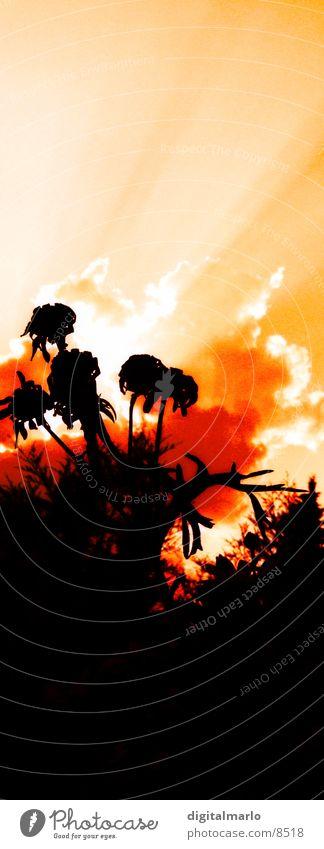 hiroshima Sonne Blume Wolken Beleuchtung Balkon bearbeitet