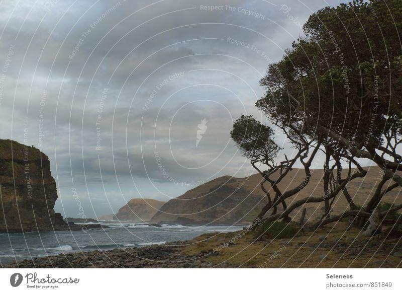 Wild Coast Himmel Natur Ferien & Urlaub & Reisen Baum Erholung Meer Landschaft Wolken Strand Ferne Umwelt Berge u. Gebirge Küste Felsen Horizont Wellen
