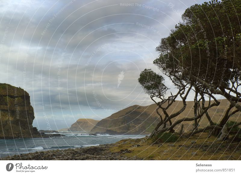 Landschaftsmalerei Ferien & Urlaub & Reisen Tourismus Ausflug Abenteuer Ferne Strand Meer Wellen Umwelt Natur Himmel Wolken Horizont Baum Felsen