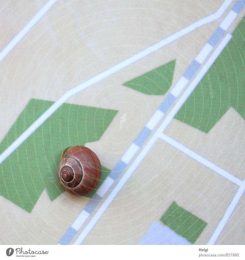 auf der Suche... Natur blau grün weiß Einsamkeit ruhig Tier Umwelt Leben Wege & Pfade grau klein außergewöhnlich braun Design Wildtier