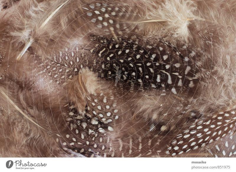 Federn schön grau fliegen braun Mode Vogel Dekoration & Verzierung Warmherzigkeit weich schlafen Zeichen geheimnisvoll Wellness trendy Schmuck