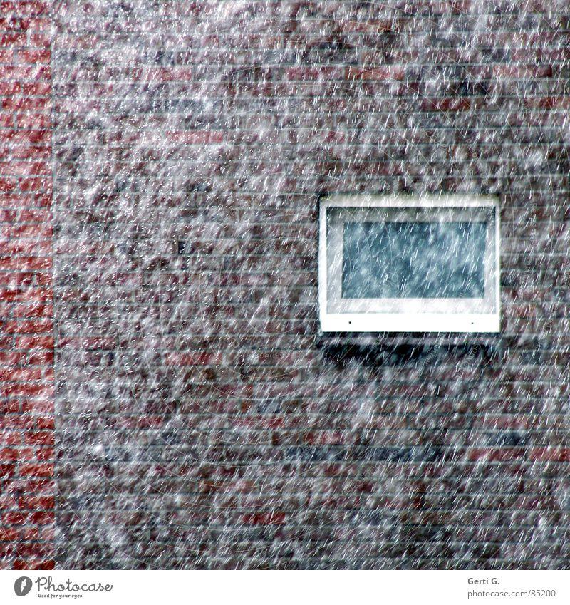 snow was fallin' Winter Haus kalt Fenster Wand Mauer Schneefall Regen Wetter Wind Fassade schlechtes Wetter ungemütlich Nieselregen Herbstfärbung Meteorologe