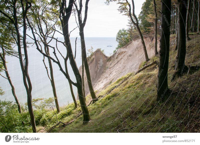Fragment II Ferien & Urlaub & Reisen Ferne Natur Landschaft Pflanze Horizont Sommer Baum Gras Küste Ostsee Kreidefelsen Klippe blau braun grün Kreideküste