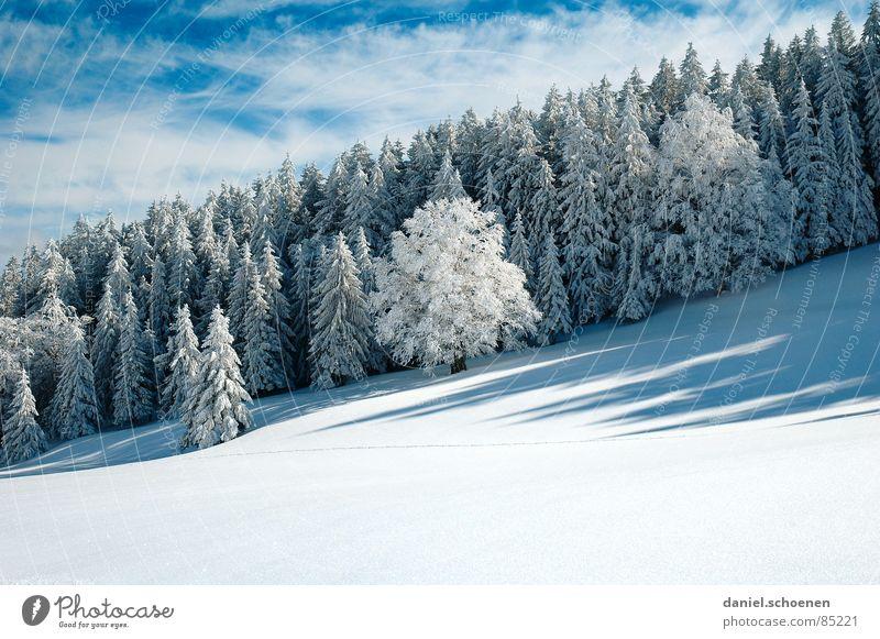 schräger Winterwald Himmel Natur Einsamkeit Schnee Horizont Hintergrundbild Freizeit & Hobby wandern mystisch Schneelandschaft Ausdauer Blauer Himmel