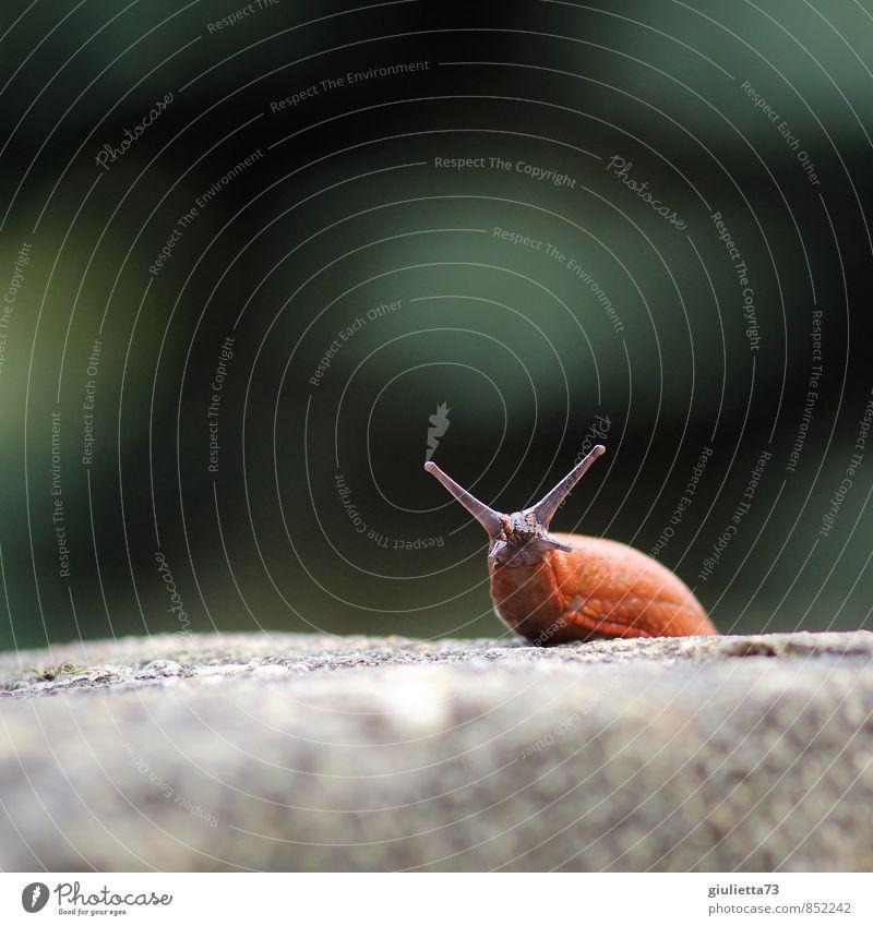 Was guggst`n so? Natur Tier Schnecke nackt Nacktschnecken Wegschnecke 1 Stein Beton beobachten krabbeln Blick Ekel schleimig braun grau grün Vorsicht