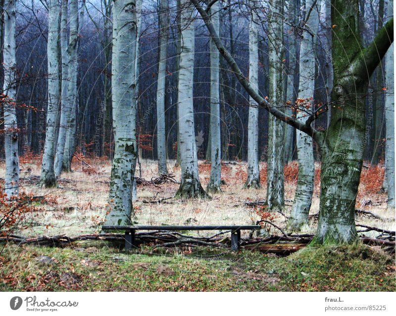 Winterwald ruhig Blatt Einsamkeit Wald dunkel Gras wandern Bank Spaziergang Freizeit & Hobby Amerika Baumstamm Buche Waldrand Laubwald