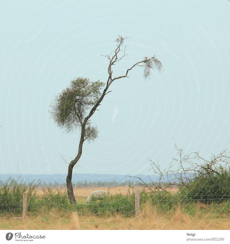 individuell... Himmel Natur blau Pflanze grün Sommer Baum Landschaft Tier Umwelt Wiese Gras außergewöhnlich braun Wachstum Sträucher