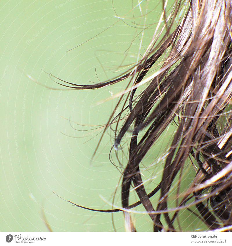 Haar-Ensemble 4 krause Haare zerzaust kalt Haare & Frisuren Wellness Wellen braun grün langhaarig gewaschen nass feucht Frau Friseur Schwimmbad Haarschnitt Bad