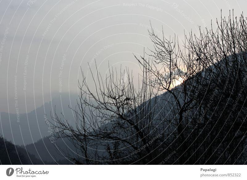 Morgenstimmung Natur Sonnenaufgang Sonnenuntergang Frühling Schönes Wetter Nebel Baum Alpen Berge u. Gebirge Ferne Unendlichkeit Stimmung Lebensfreude