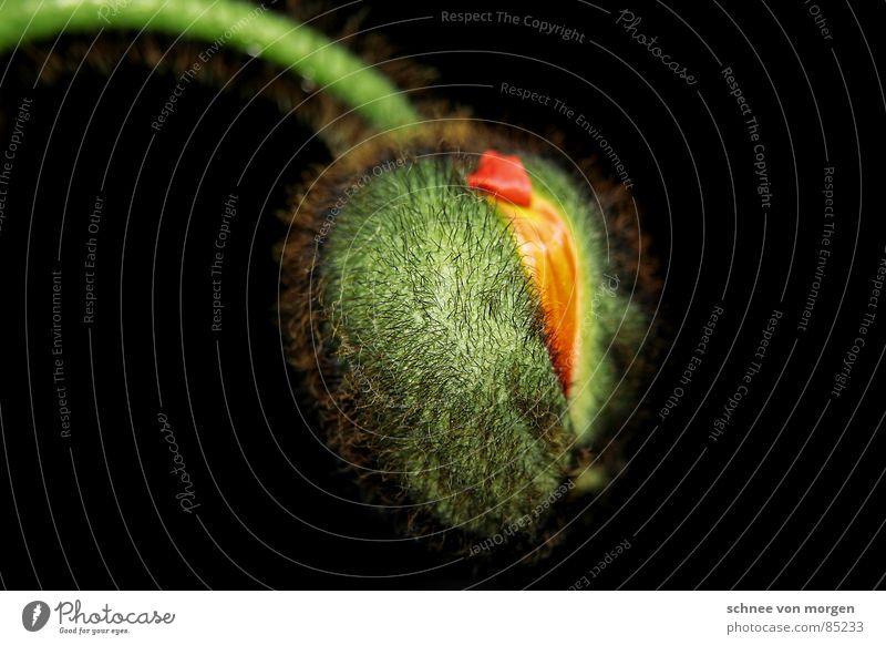 pralles leben I. Natur Blume Pflanze rot Tier gelb springen Blüte Frühling Haare & Frisuren orange Haut Schutz Blühend Blumenstrauß Beet