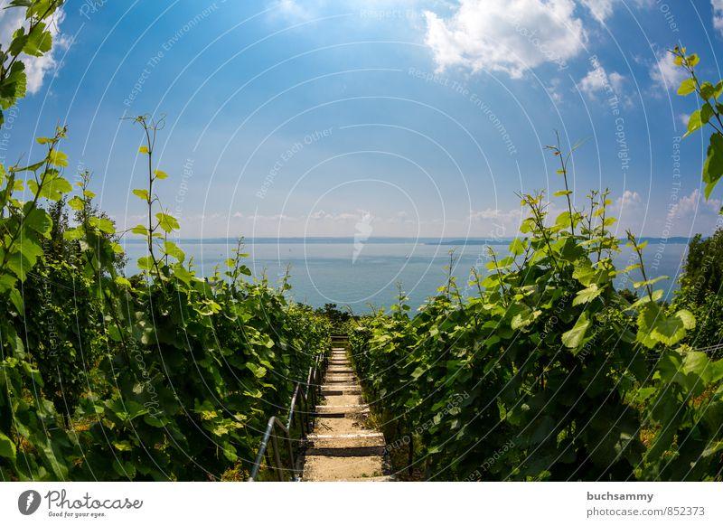 Blick auf den Bodensee von Meersburg aus Himmel Natur Ferien & Urlaub & Reisen blau grün Sommer Wasser Sonne Landschaft Wolken See Horizont Frucht Tourismus Treppe Ausflug