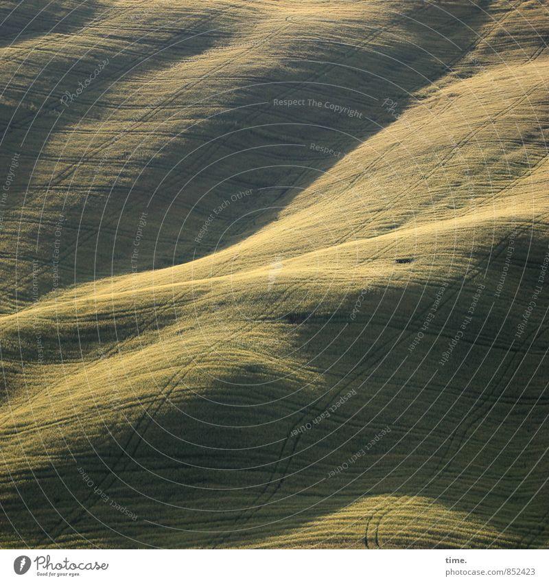 Bauernswing Landwirtschaft Forstwirtschaft Pflanze Nutzpflanze Feld Hügel Verkehrswege Wege & Pfade Traktorspur grün anstrengen skurril Stimmung Oberfläche
