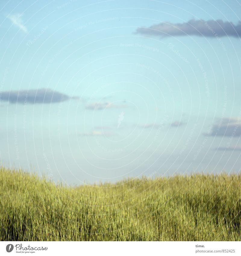 Low Flow Himmel Natur Pflanze schön Einsamkeit Landschaft ruhig Wolken Ferne Umwelt Gefühle Stimmung Erde Zusammensein Horizont träumen