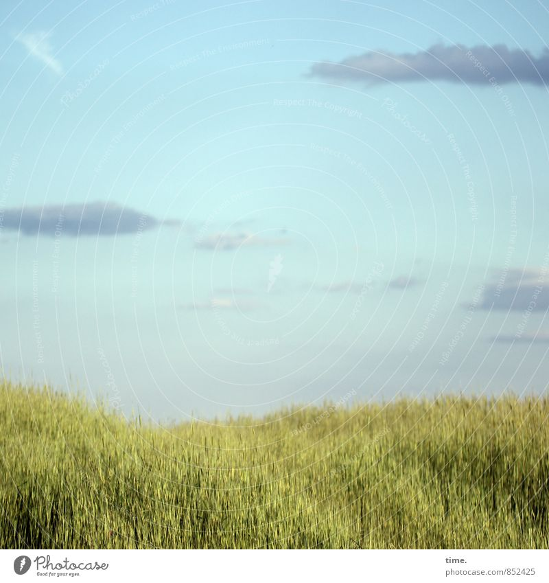Low Flow Umwelt Natur Landschaft Himmel Wolken Horizont Schönes Wetter Pflanze Nutzpflanze Getreide Getreidefeld Feld Italien Toskana Gefühle Stimmung