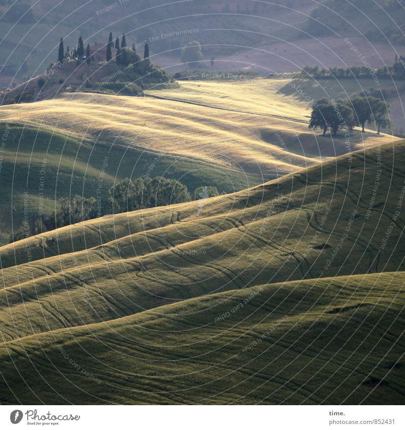 Märchenland Landwirtschaft Forstwirtschaft Umwelt Natur Landschaft Pflanze Sommer Schönes Wetter Baum Nutzpflanze Feld Hügel Wellen ästhetisch authentisch