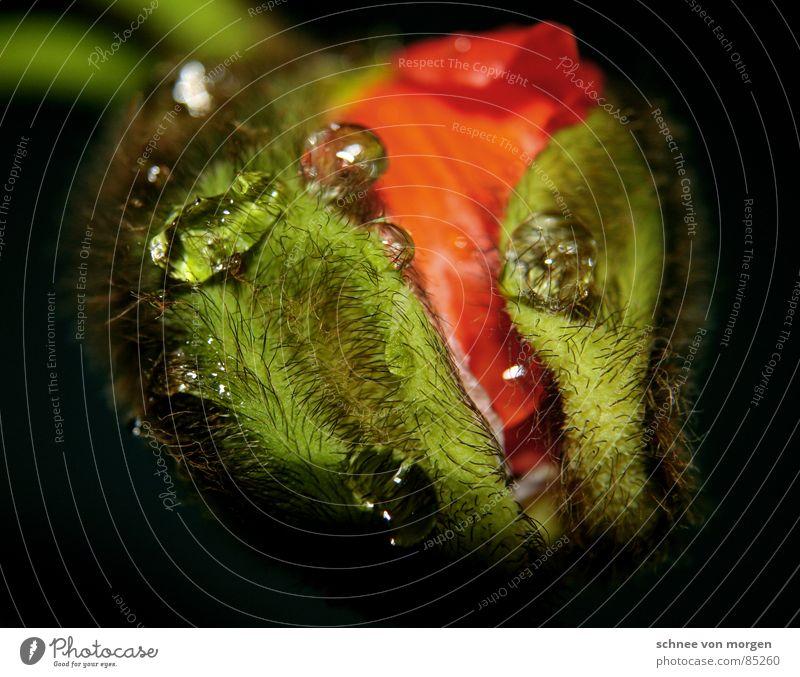 pralles leben II. Natur Wasser Blume Pflanze rot Tier gelb springen Blüte Frühling Haare & Frisuren orange Haut Wassertropfen Schutz Vergänglichkeit