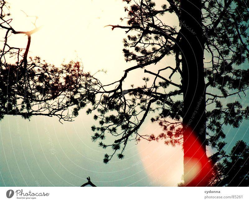 Sonne auf mein Haupt intensiv Licht blenden Färbung rot Lichtbrechung Frühling aufwachen Himmel wahrnehmen schön Baumstamm Gefühle Himmelskörper & Weltall