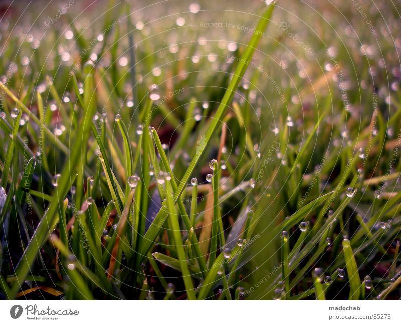 I WAKE UP AT 6 A.M. glänzend Tau Gras Wiese grün nass feucht Romantik Natur Spielen Märchen Märchenlandschaft Tagtraum träumen Verhext schön Idylle Grasland