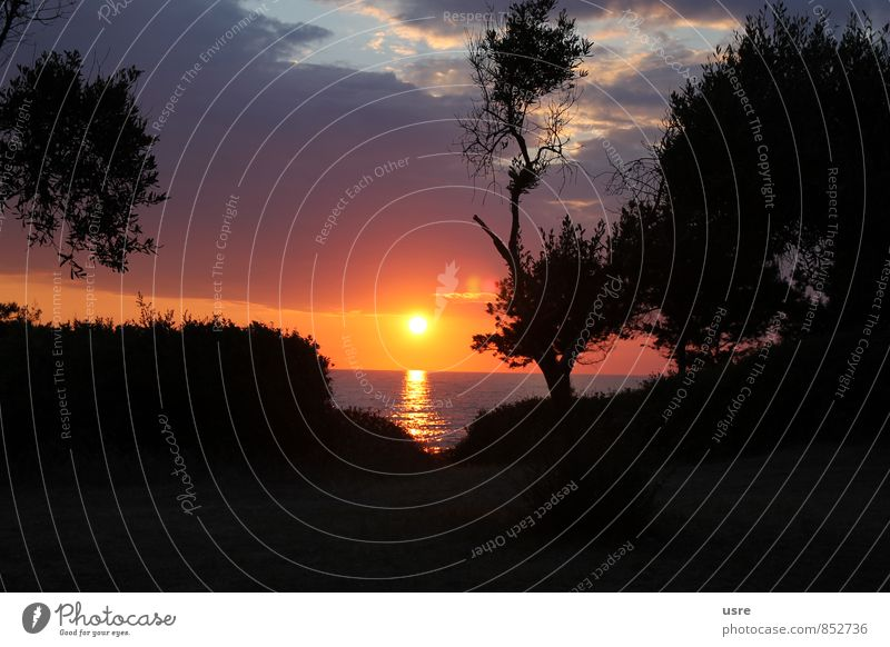 Sonnenuntergang Griechenland - Sunset in Greece Horizont Sonnenaufgang Baum Küste Gefühle Stimmung Lebensfreude schön Erholung Klima Umweltschutz 2014 Farbfoto