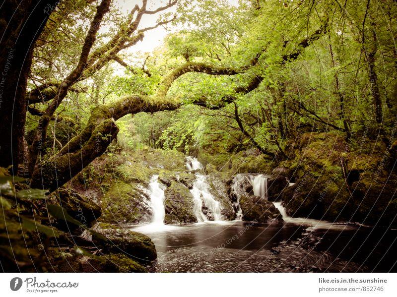 glück für alle sinne Sinnesorgane Erholung ruhig Meditation Ausflug Sommer Sommerurlaub Umwelt Natur Landschaft Pflanze Wasser Baum Grünpflanze Wald Urwald