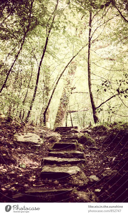 märchenwald Wohlgefühl Zufriedenheit Sinnesorgane Meditation Ausflug Umwelt Natur Landschaft Pflanze Urelemente Baum Sträucher Wald Urwald Hügel Felsen