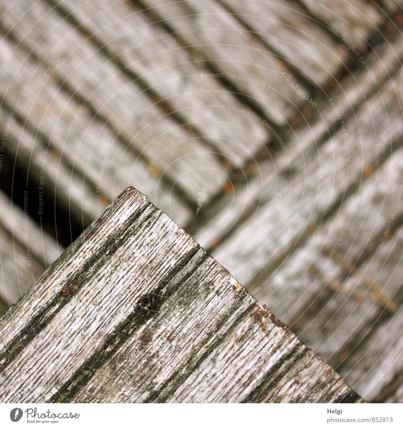 Stufen... Moor Sumpf Wege & Pfade Treppe Holz Linie alt authentisch dreckig einfach braun grau Sicherheit Ordnungsliebe bizarr einzigartig Symmetrie Irritation