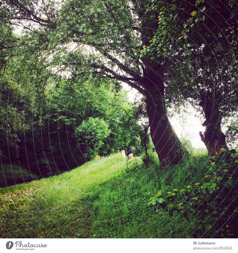 In´s Grüne.. Natur Landschaft Pflanze Erde schlechtes Wetter Baum Gras Wiese Wald grün Mensch Farbfoto Außenaufnahme Experiment Menschenleer Tag Unschärfe