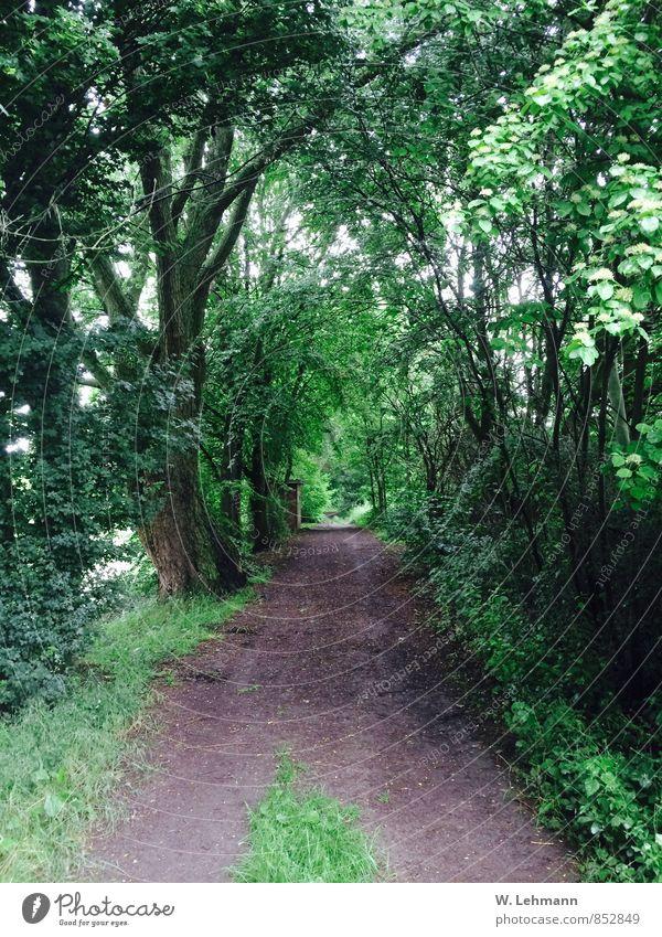 Waldweg Natur alt Pflanze grün Baum Umwelt schlechtes Wetter