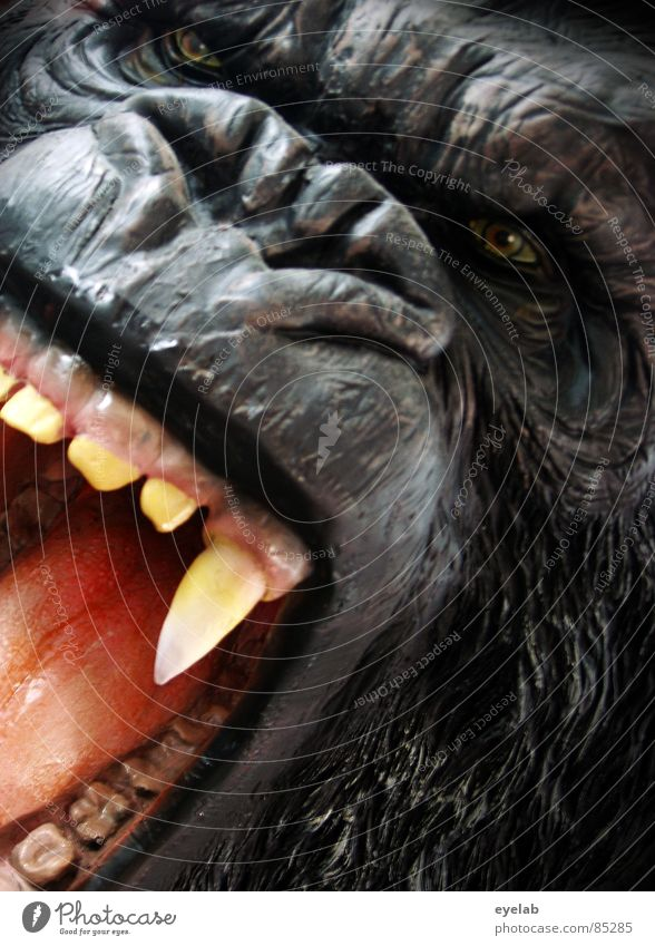 Tanztee Partner 1. Wahl Manege Wildpark Gorilla Rachen King Kong Affen Urwald Wildnis gefährlich Haustier schwarz Fell Afrika Zoo Zirkus Monster Landraubtier